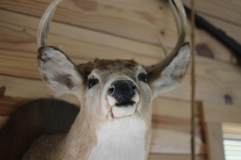 Boone's Buck.
